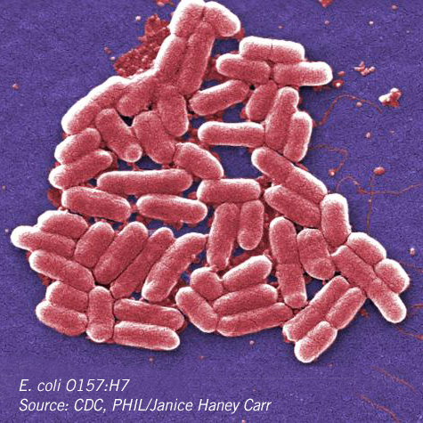o157-h7-e-coli_cdc-phil