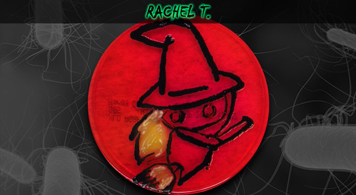 16. Rachel Trent_Wordpress