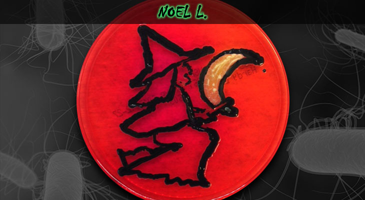 18. Noel Lineberger_Witch_Wordpress
