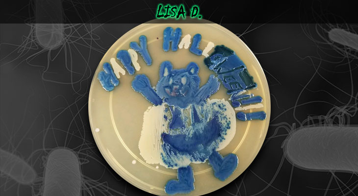 24. Lisa Dionne_Pumpkin Bear_Wordpress