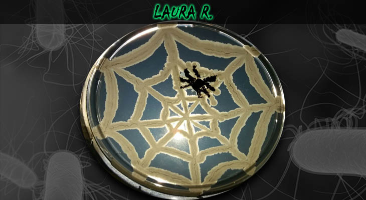 28. Laura Remondi_Spiderweb_Wordpress