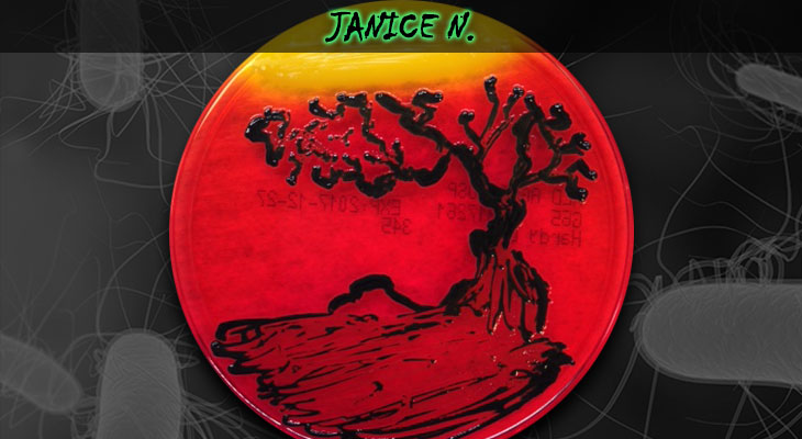 37. Janice Nigro_Tree_Wordpress