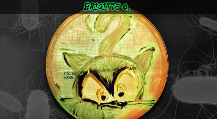 48. Brigitte Ordonez_Cat_Wordpress