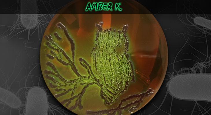 51. Amber Kasimatis_Owl_Wordpress
