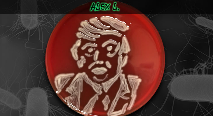 61. Alex Lewis_Trump_Wordpress
