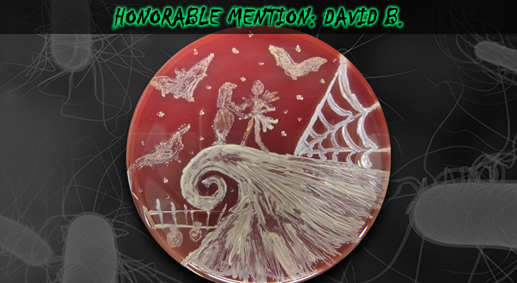 David-B-Honorable-Mention