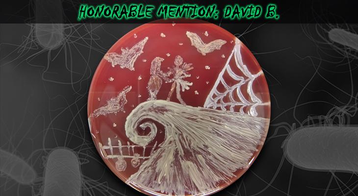 David-B-Honorable-Mention