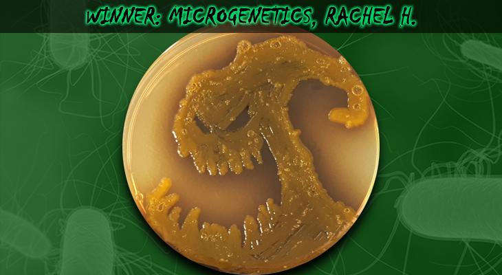 Microgenetics-Rachel-H-Winner