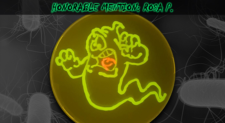 Rosa-P-Honorable-Mention
