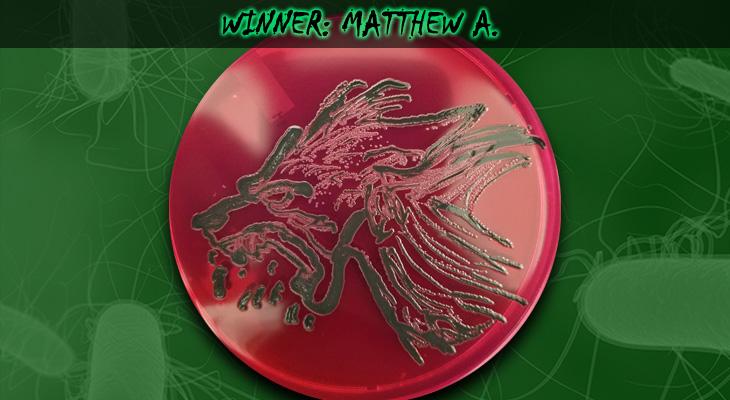 Matthew-A-Winner