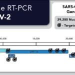 SARS-CoV-2 Gene Targets