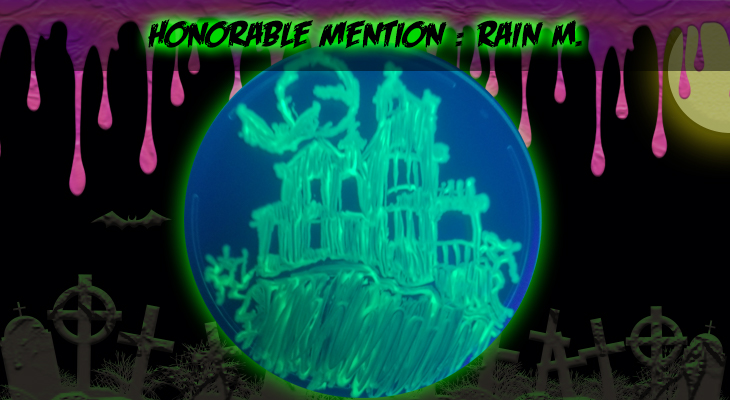 Honorable Mention 10 Rain M